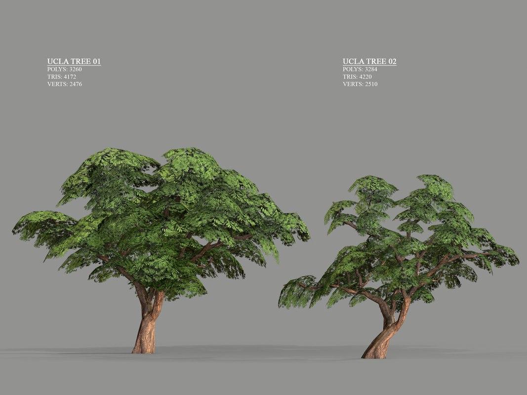 ucla tree 2 variations 3D model