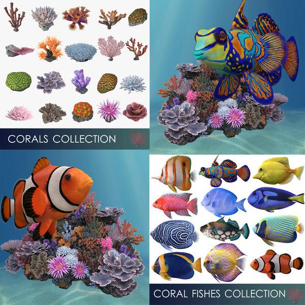 3D corals fishes