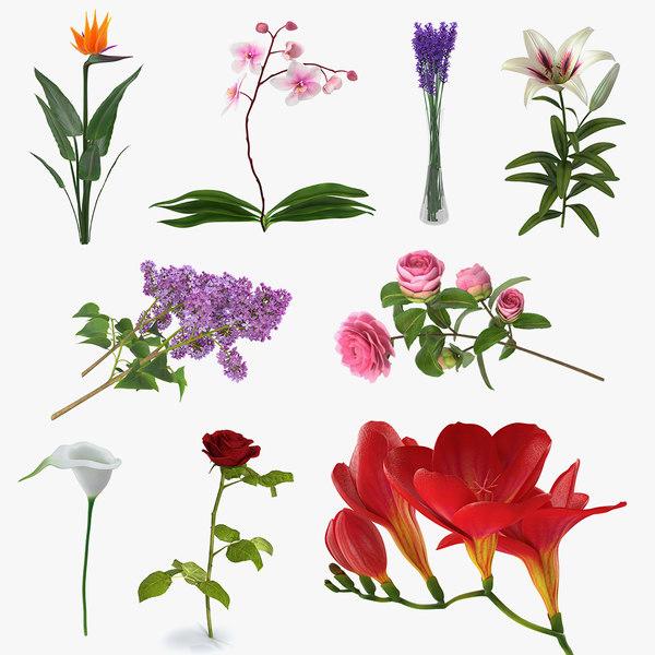 3D flowers 8 model
