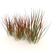 3D model imperata cylindrica red baron