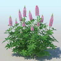 lupines 10 items 3D model