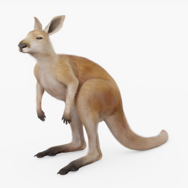 3D rigged kangaroo model