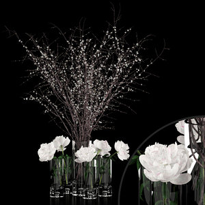 3D realistic white peonies prunus model