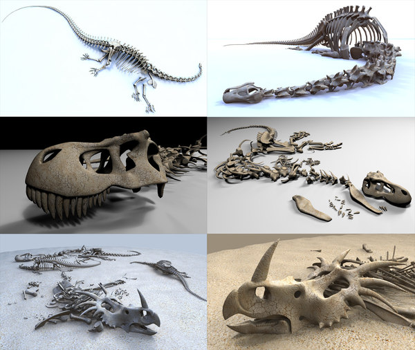 3D model dinosaur skeletons