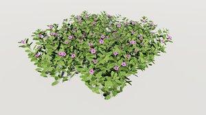 catharanthus roseus rose model