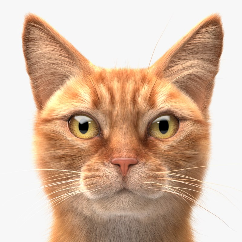 3D ginger cat hair model