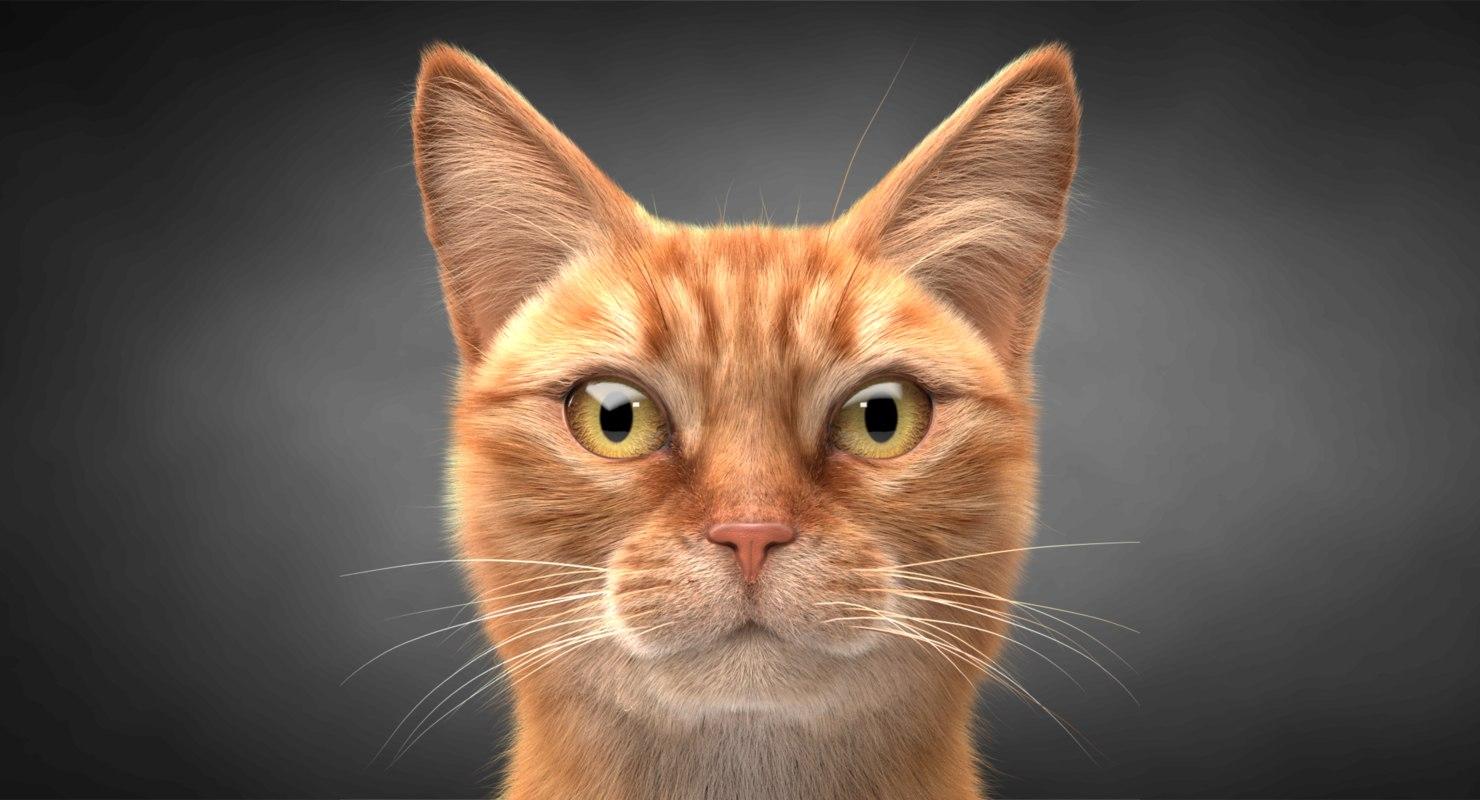 3D ginger cat hair model