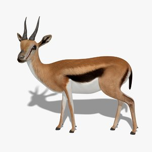 3D gazelle rigged