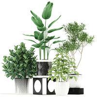 3D model plants 118