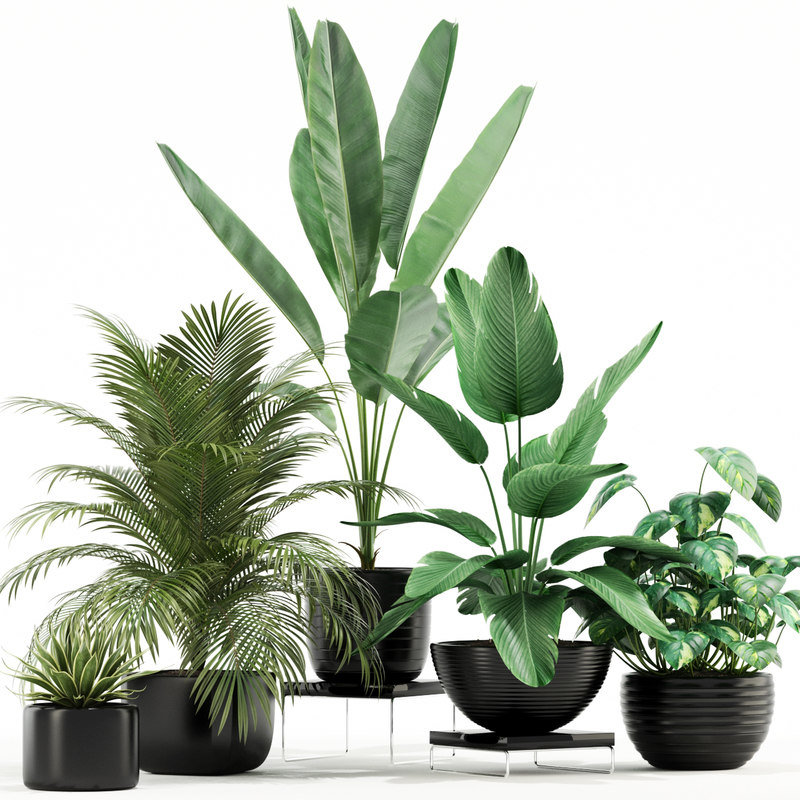 3D model plants 119