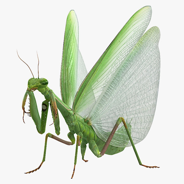 european mantis rigged model