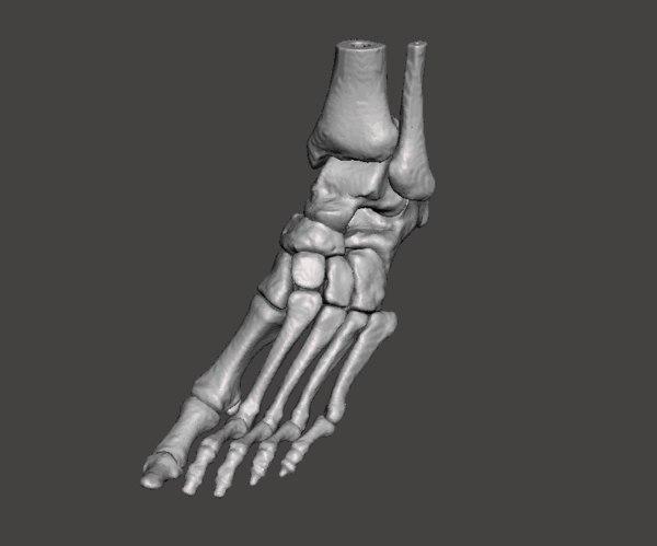 human left foot - 3D model