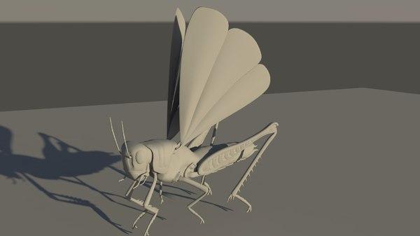 grasshopper grass hopper 3D model