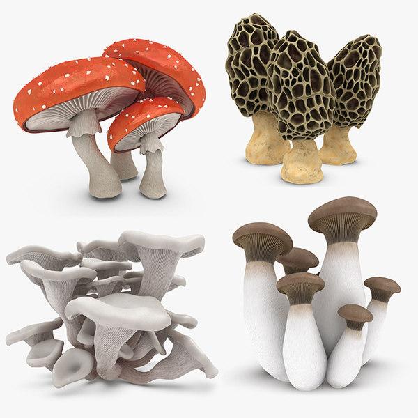 mushrooms 2 model