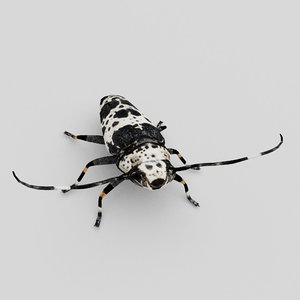 longhorn beetle 3D model