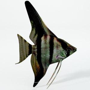 fish angelfish 3D model