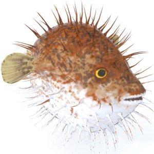 fish blowfish model
