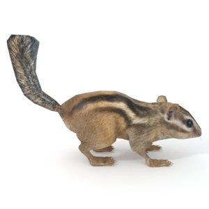 3D chipmunk model