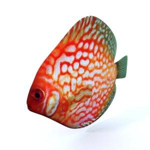 disco fish model