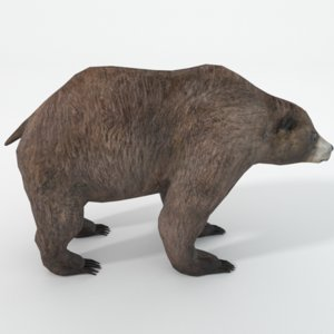 grizzly bear 3D
