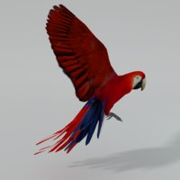 red macaw 3D model