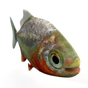 3D piranha piranh