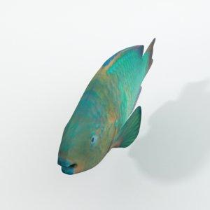 3D model rainbow parrotfish