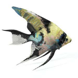 scalar fish 3D model