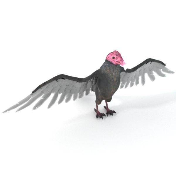 3D turkey buzzard model