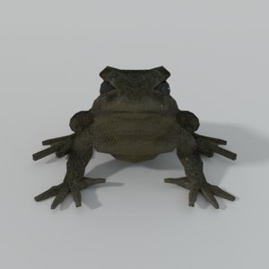 3D warty frog