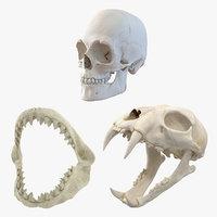 skulls tiger shark 3D model