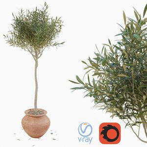3D model olive tree pot