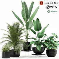 plants 119 model