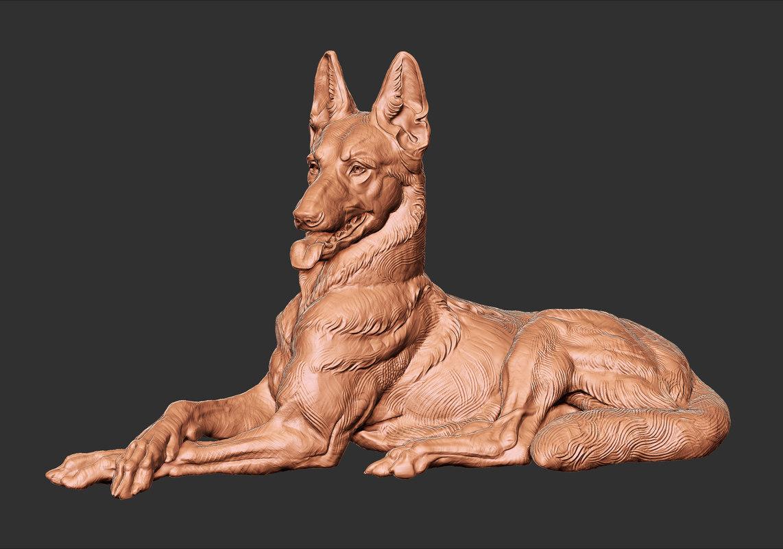 belgian malinois 3D model