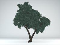 juniper tree bark 3D model