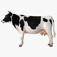 3D dairy cow rigged model