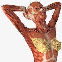 Female Muscular System Anatomy Rigged for Maya 3D Model