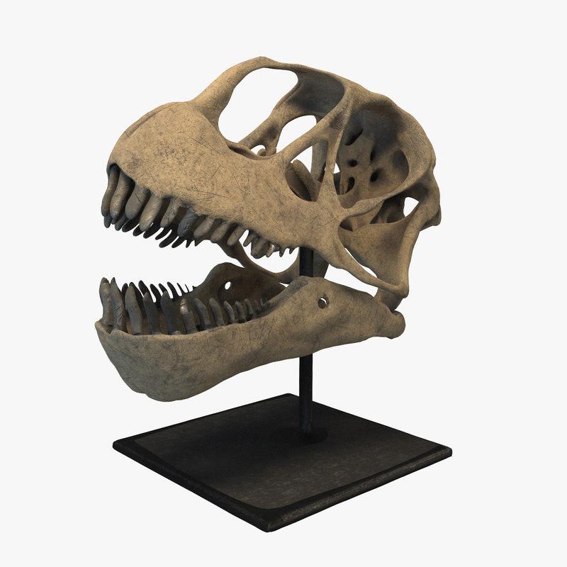 dinosaur skull 3D