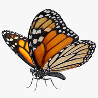 Monarch Butterfly Rigged for Maya