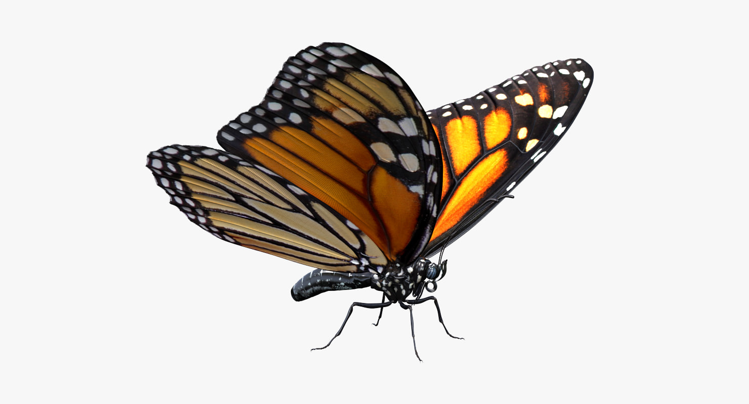 3D monarch butterfly rigged