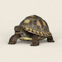 3D ready tortoise