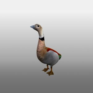 bird duck goose rig model