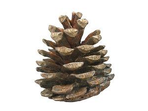 3D conifer cone ultra hd