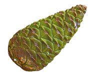 conifer cone ultra hd 3D model