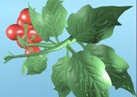 3D model cherry tomato