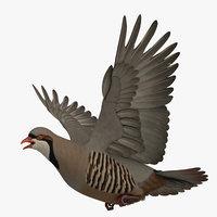 3D model rigged chukar partridge
