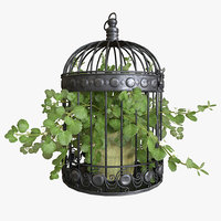 Ivy in a bird cage