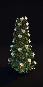 3D magnolia grandiflora flowering 3m