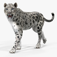 3D model snow leopard rigged