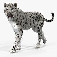 Snow Leopard Rigged for Cinema 4D 3D Model
